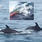 Im Video: Hier kommt ein Baby-Wal zur Welt (Foto)
