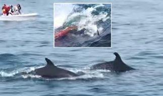 Die Aufzeichnungen einer Walgeburt vor der Kalifornischen Küste. (Foto)