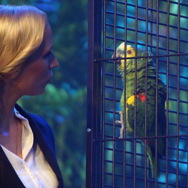 Bei RTLNOW: Wenn Tier auf Promis trifft wird es lustig (Foto)