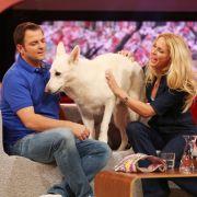 Hundeprofi erklärt die Mythen rund um Hund, Katze  Co. (Foto)