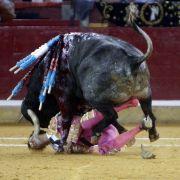 Der Stierkämpfer Juan Jose Padilla wird bei einem Kampf in Saragossa, Spanien, am 07.10.2011 schwer verletzt. Schon eine Woche nach einer grausigen Verletzung will er in die Arena zurückkehren.