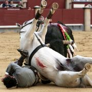 Auch zu Pferd sind Stiere immer noch gefährliche Gegner, wie dieses Bild zeigt.