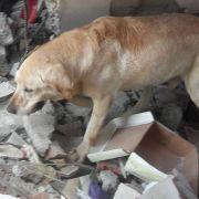 Rettungshund stirbt erschöpft nach Rettungsaktionen (Foto)