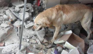 Nach vier Tagen bricht Rettungshund Dayko erschöpft zusammen. (Foto)