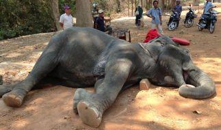 Elefantenkuh Sembo liegt erschöpft am Boden. (Foto)