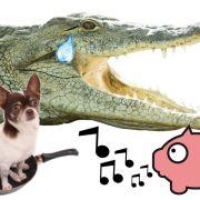Daher kommen DIESE tierischen Redewendungen (Foto)