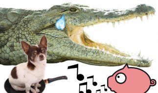 Oft stecken Tiere hinter in deutschen Sprichwörtern. (Foto)