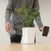 Echt genial! Strom aus dem Blumentopf (Foto)