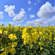 So zauberhaft wird das Wetter im Wonne-Monat (Foto)