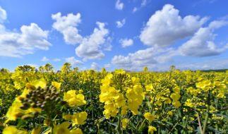 Die erten beiden Mai-Wochen versprechen viel Sonne. (Foto)