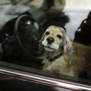 Schon 20 Grad können tödlich sein! Tipps für Hundehalter im Sommer (Foto)
