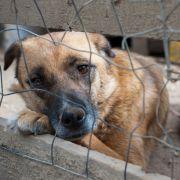 Ekelhaft! Ehepaar lässt 34 Hunde verwahrlosen (Foto)