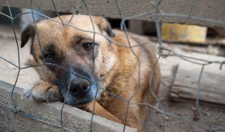 Das Ordnungsamt Duisburg konnte 34 verwahrloste Hunde aus einem Dreifamilienhaus retten. (Symbolbild) (Foto)