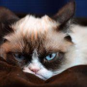 So zuckersüß sind die berühmtesten Katzen der Welt (Foto)