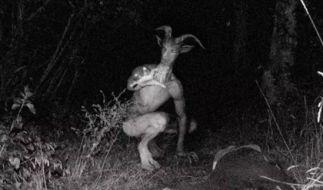 """Der """"Goatman"""": Nach über 60 Jahren gibt es nun endlich Bilder vom mysteriösen Ziegenmann. Doch sind sie echt? (Foto)"""