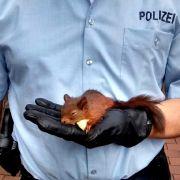In der Falle! Feuerwehr rettet Eichhörnchen (Foto)