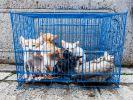 Strafen für Tierquäler