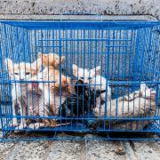 25.000 Euro Bußgeld für Sex mit Tieren (Foto)