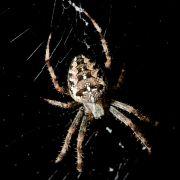Polizist rettet Spinne vor dem Staubsauger-Tod (Foto)