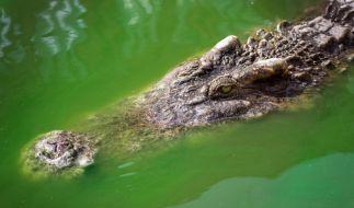 Ein Mann hat Krokodilattacke mit Zündkerzen und Werkzeug abgewehrt. (Foto)