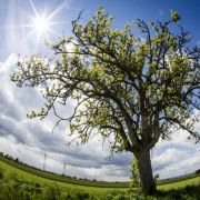 Der Sommer kommt! So hoch steigen jetzt die Temperaturen (Foto)