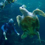 Uralt, riesig und vom Aussterben bedroht: Darum sollten wir Schildkröten lieben (Foto)
