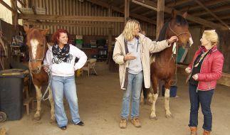 Jürgen zeigt seinen Auserwählten, wie mit den Pferden umzugehen ist. (Foto)