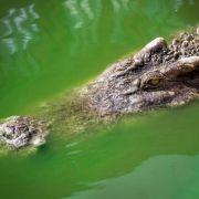 Bestialisch zerfleischt? Frau nach Krokodil-Attacke vermisst (Foto)