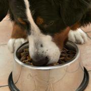 Hunde müssen nun auch die menschlichen Food-Trends mitmachen und essen nun auch Goji-Beeren mit. Brauchen tun sie das jedoch nicht.