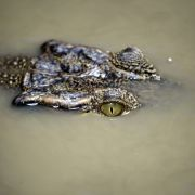 Sex-Sklavinnen wurden Krokodilen zum Fraß vorgeworfen (Foto)