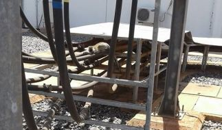 Stromausfall in Kenia: Weil ein Affe auf einen Transformator fiel, war in dem afrikanischen Land für Stunden der Strom weg. (Foto)