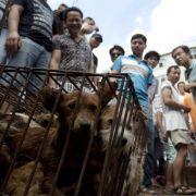 Ekelhaft! Chinesen feiern Hundefleisch-Festival (Foto)