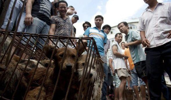 Schlachtfest in Yulin