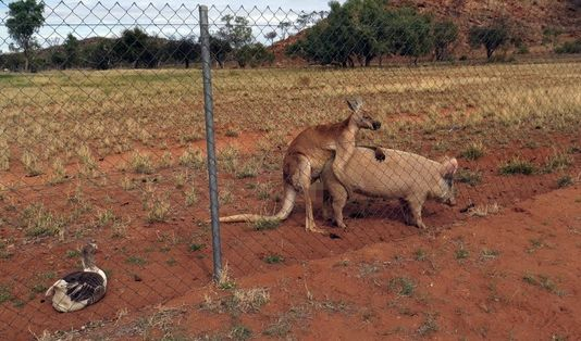 Sex-Skandal im Tierreich
