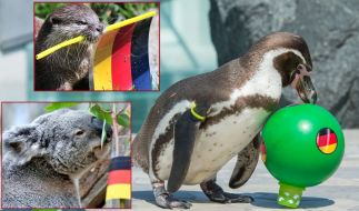 Pinguin, Koala, Otter und Co - niedliche Tiere werden von Fußball-Fans gern als Ergebnis-Orakel eingesetzt. (Foto)