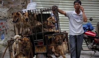 Allein der Transport ist für die Tiere eine Tortur - eng eingepfercht, auf harten Gittern und ohne Wasser. (Foto)