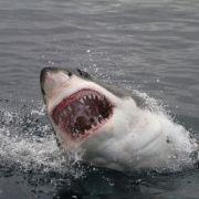 So gefährlich können Ihnen Haie im Urlaub werden (Foto)