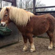 Widerlich! 100-Kilo-Mann vergewaltigt 3 Ponys (Foto)