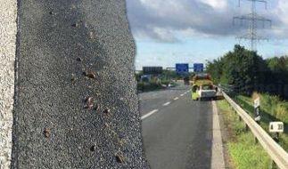 Auf der A44 ist ein Trabi auf einer Schneckenspur ausgerutscht und hat sich überschlagen. (Foto)