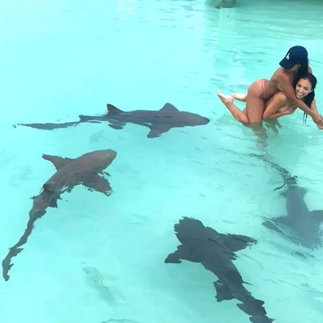 Im Video! Hier gehen Models mit Haifischen baden (Foto)