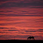 Nach Sex mit Ponys - Zeuge offenbart widerliche Details (Foto)