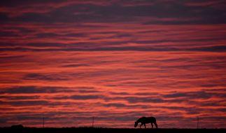 Der Pony-Vergewaltiger konnte gestellt werden. Er bleibt auf freiem Fuß. (Symbolbild) (Foto)