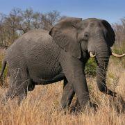 Wilder Elefant tötet Selfie-Fotografen (Foto)