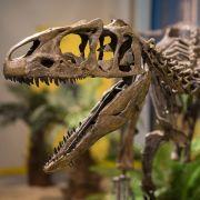 Neue Dinosaurier-Art in Argentinien entdeckt (Foto)