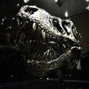 Neue Theorie: So starben die Dinosaurier wirklich aus! (Foto)
