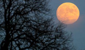Bei der Mond-Diät hilft der Erdtrabant beim Abnehmen. (Foto)