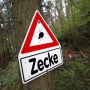 Zwei Hunde durch Zecken getötet! Wie groß ist die Zecken-Gefahr wirklich? (Foto)
