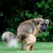 Mann vor Gericht wegen Hundekot-Fetisch (Foto)