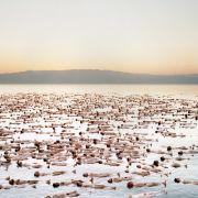 Mehr als 1000 Freiwillige posieren am 26.10.2010 nackt im Toten Meer in der Nähe von Ein Gedi (Israel) für den Fotografen Spencer Tunick.