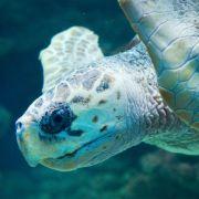 Brutal! Mann tötet Schildkröte mit einem Hammer (Foto)